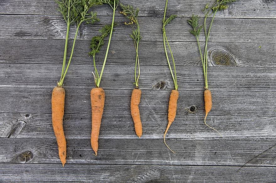 vegetables harvest cultivation thanksgiving garden fresh carrots carrot colorful