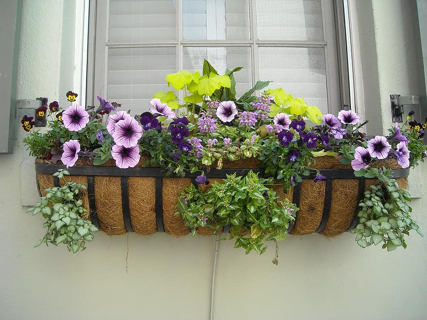 window box flowers window box house architecture exterior home old