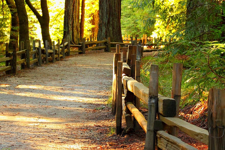 wood fall tree nature footpath path pathway walkway sunny