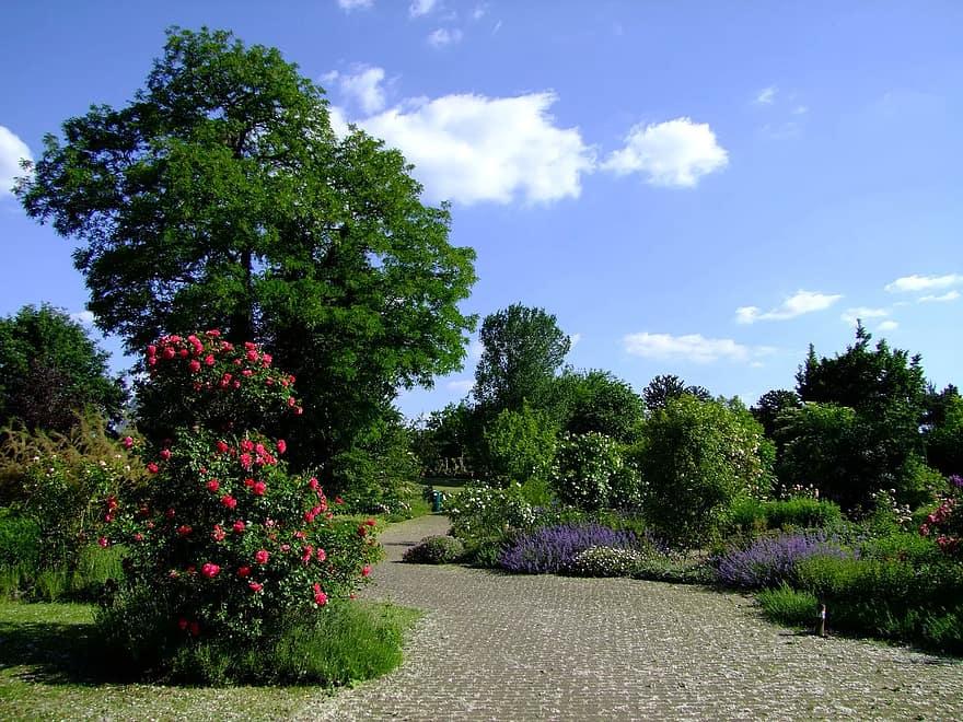 botanical garden dusseldorf garden spring rosenbaum trees away germany