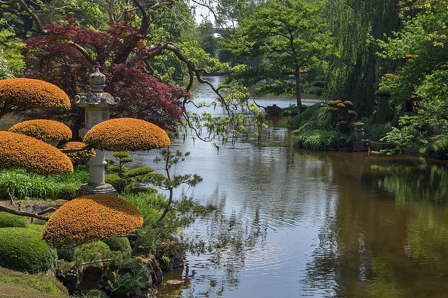 garden oriental botany japanese park plant tree water malauvrier
