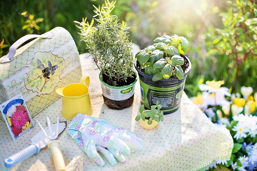 Texas landscape idea planting herbs summer gardening garden tools