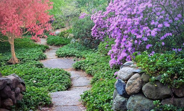 spring flowering trees path pathway walk nature garden blossoms season