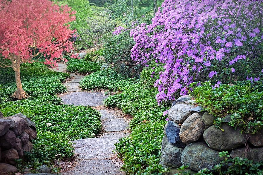 Texas landscaping ideas spring flowering trees path pathway walk nature garden blossoms season