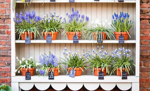 flowers shelf garden summer case bloom colorful plants shell
