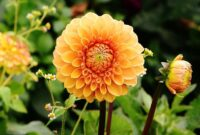 How to Weed a Garden in Correct Ways Depending on the Types