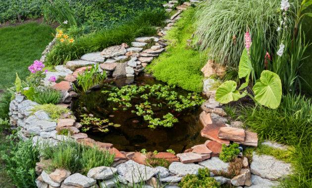 Simple Fish Pond Ideas