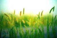 grass grasses nature landscape meadow summer green close up macro