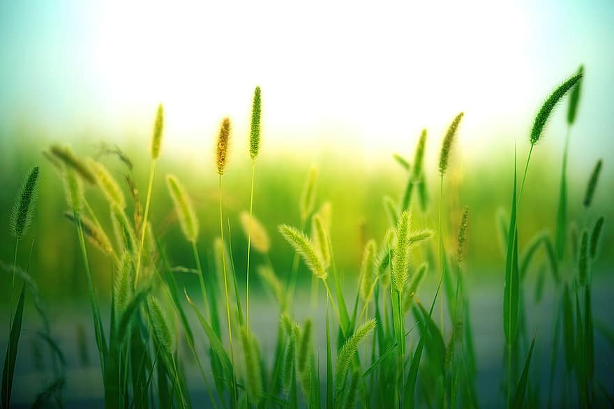 grass grasses nature landscape meadow summer green close up macro