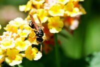 wasp bees