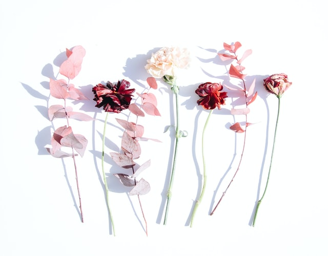 tissue flower paper flower wall decor