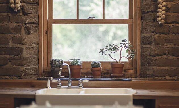garlic cactus window nature green food house cooking farm