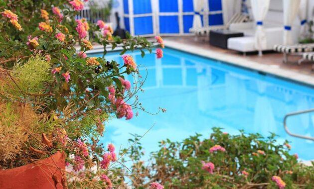 pool swimming vacation hotel garden gardening swimming pools blue summer