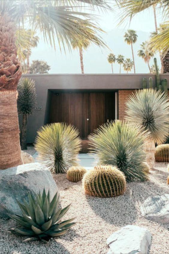 Beautiful succulent cactus ideas
