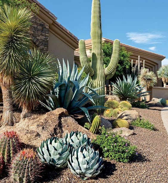 Desert Landscaping Design