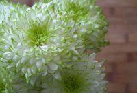 flowers white green spring garden plant sun romantic affection
