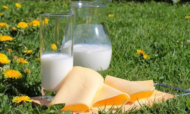 milk cheese cheese slices milk products food healthy vitamins calcium drink