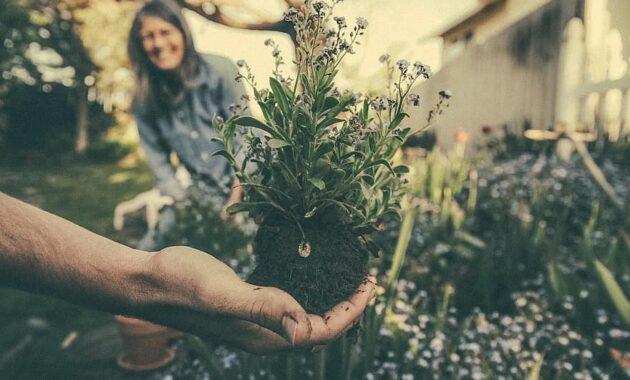 planting gardening flowers plant garden growing botanical soil hand