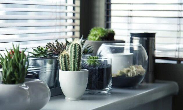 pots plants cactus succulent shelf window garden nature gardening