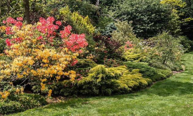 springs best show garden backyard horticulture arboretum flowers lawn grass walk