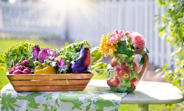 vegetables garden harvest organic green gardening lettuce summer nutrition